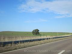 IMG_4917-copy (Claudio Vzquez @ cvphotoart) Tags: argentina buenosairesprovince provinciadebuenosaires canonsx20 canons110