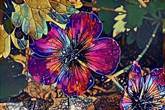 2GeraniumDream (Bugldy99) Tags: dreamscope photosurrealism photomanipulation fotomanipulation fotosurrealism fotomanipulated manipulated manipulation photomanipulated