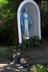 the cat who visited Mary and me  06 (Violentz) Tags: cat virginmarystatue statue virginmary kitty summerday
