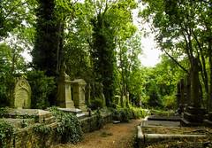 11-Highgate Cemetery East - Graves 2-1029 (md2399photos) Tags: 11aug16 dickwhittingtonscat highgatecemetery karlmarx london notesonblindness stpancras themeetingplacebypaulday