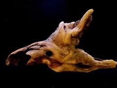 Driftwood (maytag97) Tags: driftwood maytag97