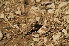 "Lizard • <a style=""font-size:0.8em;"" href=""http://www.flickr.com/photos/63501323@N07/16414231573/"" target=""_blank"">View on Flickr</a>"