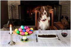 Happy Easter ! - Joyeuses Pâques ! (SergeK ) Tags: red food dog dinner easter fire fireplace collie bc wine border fresh eggs whisky bordercollie pâques sergek acanca