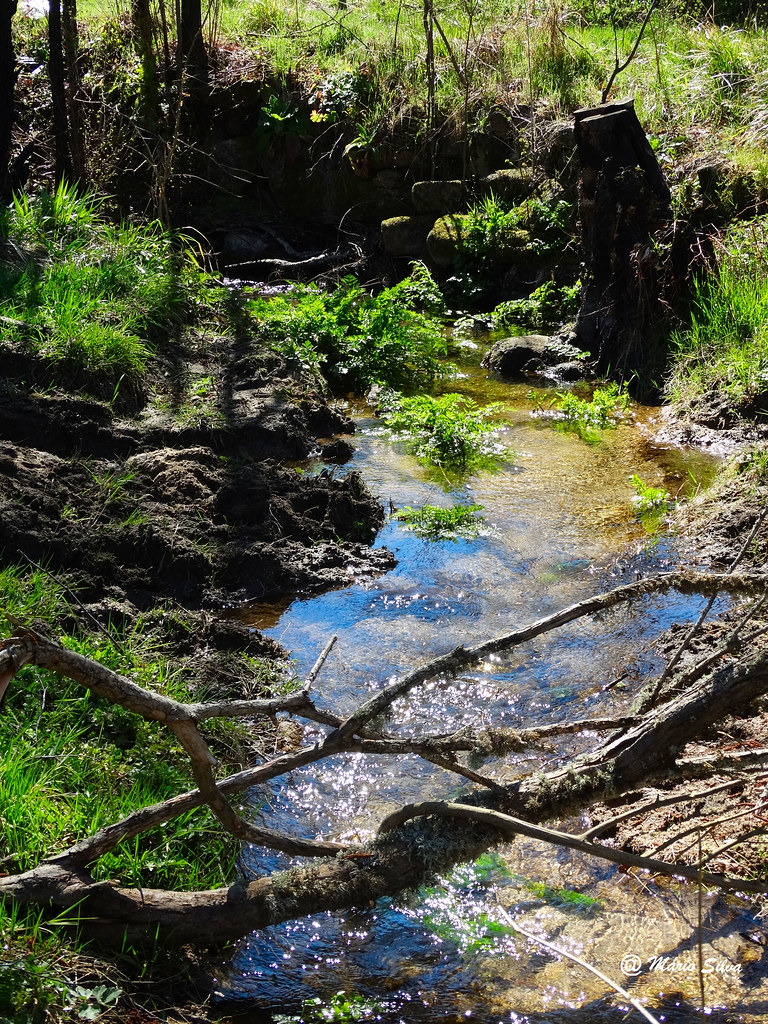 Águas Frias (Chaves) - ... corre calmamente a água do ribeiro ...