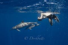 IMG_4519 (nealmoc) Tags: hawaii underwater dolphin bigisland kona underwaterphotography cetacean