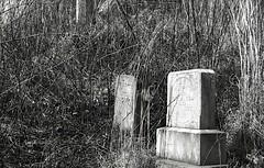 (Matt Allouf) Tags: white black film 35mm minolta grain delta westvirginia 100 pushed ilford x700 epsonv500