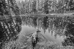 Hope and Tarn (Mark Griffith) Tags: washington hiking hike rainier summit i90 defiance mtdefiance masonlake dawnpatrol kulakula mtbakersnoqualmieforest littlemasonlake nikkor1424mmf28 sonya7ii 20150509dsc04297edit