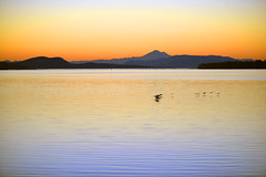 WINGS AS ONE (DESPITE STRAIGHT LINES) Tags: morning sea canada reflection wet water silhouette sunrise island rising dawn islands coast geese am nikon flickr day waves bc britishcolumbia tide silhouettes wave vancouverisland coastal coastline washingtonstate tidal sidney mountbaker canadageese goldenhour mtbaker skein d800 firstlight thegoldenhour paulwilliams lowlightphotography sidneybritishcolumbia sunarise sidneybc nikon70200mm nikkor70200mm sidneybythesea nikond800 mountbakerusa despitestraightlines mtbakerusa mountbakerwashingtonstate