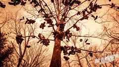 """Lost """"Soles"""" (TGB Filmography) Tags: old trip tree history clouds lost happy photography shoes branch message alabama shy story fade roadside soles storetelling"""