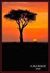 SUNSET IN MASAI MARA......SEPT 2015 (M Z Malik) Tags: africa nikon kenya ngc safari kws masaimara africansunset d3x 200400mm14afs