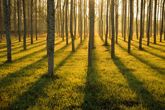 Light & shadows (Jordi sureda) Tags: morning trees light naturaleza sun nature forest landscape photography nikon moments natura fotografia llum bosc jordisureda