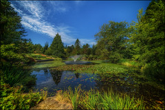Livingston Lake (Martin Smith - Having the Time of my Life) Tags: livingstonlake vandusenbotanicalgarden vandusengarden vancouver samyang14mm28 nikond750 martinsmith martinsmith lake reflections waterlillies britishcolumbia canada ca landscape serene fountain grasses