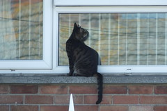 Cat on bedroom windowsill (Moldovia) Tags: fujifilmfinepixhs50exr bridgecamera windowsill cat feline animal pet bedroomwindow window blinds catspotting catnipaddicts catalog