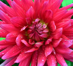 Grten der Welt (Gardens of the World) (Bjrn O) Tags: grten garten garden grtenderwelt botanik pflanze pflanzen plant plants flower flowers blume blumen pink rot blhen blte blossom blten