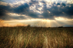 ... (Theophilos) Tags: summer sky clouds sunset meadow dhrama greece  wildflowers