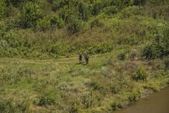 The three wonderers... (corneliu_so) Tags: moldova europe orheiulvechi nature water grass plants touring siteseeing
