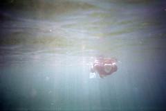 film (La fille renne) Tags: film analog 35mm lafillerenne lomography lomolca lomography400 sea roadtrip travel portrait krab underwater snorkeling laciotat mediterranean grain light nature