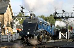 Backing On At Grosmont. (neilh156) Tags: steamloco steamengine steamrailway railway 60007 sirnigelgresley grosmont northyorkmoorsrailway a4pacific pacificloco lner gresley