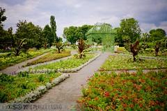 PLW_5583 (Laszlo Perger) Tags: wien vienna sterreich austria blumengarten hirschstetten flowergarden