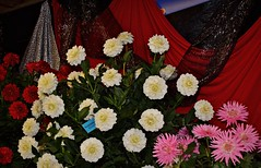 Marshmallow 9 4 2016 (rbdal (Rick Dalrymple)) Tags: marshmallow semperfi hokeypokey bouquet swanislanddahliafestival swanislanddahlias dahlia dahlias dahliafestival flowers blooms canby clackamascounty oregon d7000 nikon newhybrids
