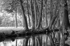 de toutes parts (glookoom) Tags: bw blanc blackandwhite monochrome noiretblanc nature noir lumire light landscape paysage contraste effet extrieur ennoiretblanc eau rhnealpes rivire france flou arbre filtrend