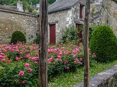 Rosegarden last spring... Happy Fence Friday HFF (capvera) Tags: hff happyfence friday roses rosegarden spring roseraie cottage stones davincigarden