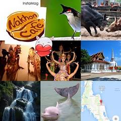 นครศรีฯเมืองน่าอยู่ เมืองธรรมชาติและธรรมะ เมืองแห่งวัฒนธรรมดูหนังตะลุง โนราห์ ฟังเสียงนกกรงหัวจุก ดูวัวชน เล่นน้ำตก เซวฟี่กับโลมาที่ขนอม. แล้วมากินกาแฟเมืองคอน@ Nakhon Cafe จุดพักของคนรักกาแฟ กาแฟจากเทือกเขาหลวง