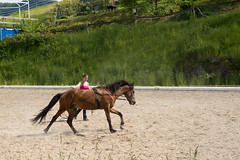 Training (akk_rus) Tags: horse training austria nikon europe 28 nikkor osterreich d800 лошадь австрия 3570 конь reifnitz европа worthersee nikkor357028 nikond800 тренировка райфниц