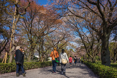 Kansai 2015 (kelvintkn) Tags: city travel people urban plant flower colour nature japan digital daylight asia sony 28mm evil osaka f2 fullframe lightroom autofocus wideanglelens primelens mirrorless dfine2 sharpenerpro3 emount colourefexpro4 sonyilce7r sonyfe28mmf2