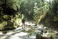 Towards Kedumba Creek,  Blue Mountains National Park, NSW, April 1970. (garratt3) Tags: aus bluemountains bluemountainsnationalpark bushwalking film mountsolitary pentax rural wilderness australia kodachrome nsw newsouthwales paddymade