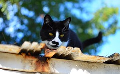 Cat on Shed (Scott MacDonald Photography) Tags: trees sky pet animal cat rust colorful shed explore