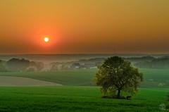 Sundown @Mülheim (jennifer.stahn) Tags: sunset orange sun tree fog landscape nikon sonnenuntergang nebel sundown jennifer grün ruhr baum mülheim muelheim stahn d7000