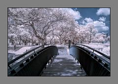 P1010076 (xxtreme942) Tags: park trees garden ir singapore infrared
