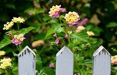 3 pickets (Krasivaya Liza) Tags: usa sc coast town south southern coastal carolina beaufort bluffton