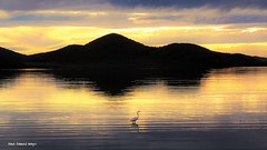 Sunset over Wallis Lake & Great Egret from Sunset Point, Pacific Palms, NSW (mypix4u2c) Tags: sunset australia nsw egret greategret sunsetpoint ardeidae ardeaalba largeegret wallislake pacificpalms midnorthcoast commonegret bootibootinationalpark