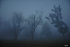 Don't be afraid.... (Igor Danilov) Tags: blue mist fog night nikon walk iso400 dream noflash 180 dslr 18mm f35 keepdreaming todream nikond90