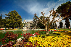 Turkish Story (Falcon EyE) Tags: dolmabahcepalace colors colorful beauty garden civilization turkey istanbul tour tourism heritage history tulip water fountain trees yellow landmark ottoman old euorpe dolmabahe palace dolmabahepalace beiktadistrict