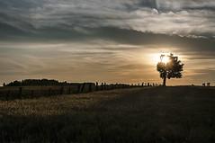 Evening Finale (Knarr Gallery) Tags: sunset sky clouds colour field crops grain harvest tree evening nikon d300 topaz nikon18200mmvriiafs knarrgallery darylknarr knarrphotography
