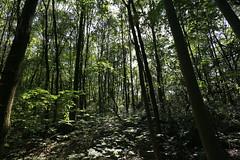Im Wald / In the forest (Pascal Volk) Tags: berlin lichtenberg landschaftsparkherzberge berlinlichtenberg wideangle weitwinkel superwideangle superweitwinkel ultrawideangle ultraweitwinkel ww wa sww swa uww uwa wald forest baum tree 17mm canoneos6d canonef1635mmf4lisusm