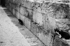 Gipsy cats (manoruo) Tags: gato gatos cats cat gats gat gipsy gitano tarragona tarraco kodakfilm blackandwhite blancoynegro bw byn analogic istillshootfilm ishootkodakfilm film kodak tmax filmisnotdead analog chat