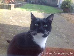 Sat, Jul 23rd, 2016 Lost Male Cat - Aghards Road, Celbridge, Kildare (Lost and Found Pets Ireland) Tags: lostcataghardsroadkildare lost cat aghards road kildare july 2016