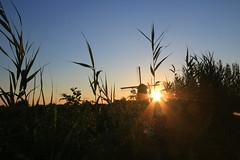 Mill in the grass (alideniese) Tags: kinderdijk southholland thenetherlands windmill silhouette grass sunset sun sunbeams evening dusk landscape sky