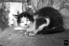 Alley cat (Frankhuizen Photography) Tags: alleycat ayet france 2015 kat chat street straat eyes looking you wild fotografie photography steeg zwart wit black white bw zw monochrome