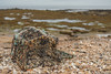 Lobster Pot On Kingsbarns Beach (KCL Images) Tags: lobsterpot beach sand kingsbarns fife standrews shells rocks sea