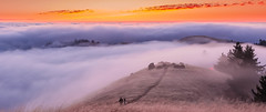 Fog Harmony.. (SuchismitaSen) Tags: mounttamalpaisstatepark mounttamalpais mounttamalpaisstateparkmillvalley mounttamalpaisstateparkcalifornia california usa abc7now wildbayarea wildcalifornia sunsetvision westcoastexposures inspiringphotographyadmired colorsofday heatercentral nikon nikond810 d810 nikon1424mm wideanglelandscape internationalgeographic addictedtonature exemplaryphotos nikonflickraward etsy finegold flickraward flickrbronzeaward flickrhearts landscapelovers landscapesdreams naturesprime sapphire bestshotawards spiritofphotography nature landscape sky cloud clouds color colors colorful sunset water fog fogphotography lowfog lowfogphotography