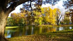 Walk at a pond in Pushkin (alexxspb) Tags: autumn  tree  pond