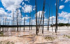 """Bobby Socks"" (Morten Kirk) Tags: mortenkirk morten kirk usa 2016 sony a7rii a7r ii sonya7rii ilce7rm2 zeiss batis 25mm f2 225 distagon batis225 batis25mmf2 zeissbatis225 yellowstone national park ynp bobbysocks trees fountain paint pot trail"