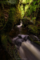 Touching takayna (hillsee) Tags: nikon d810 takayna tarkine tasmania temperate rainforest tanninstained water creek river flow light fern