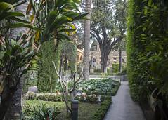 Alcazar Gardens (Hans van der Boom) Tags: europe spain vacation holiday seville sevilla alcazar palace gardens garden tropical trees hedges sp