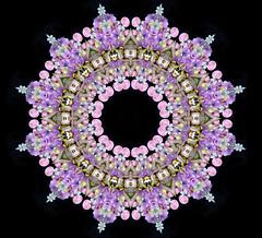 Iris of a fairy (Cristina Burns) Tags: cristinaburns surrealism contemporaryart mandala foodart flowerdesign fooddesign design interiordesign photoshop stilllife fineart foodphotography